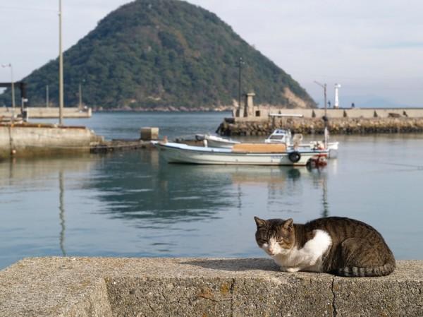 141110sanagineko 600x449 - ストビューの猫、香川県多度津町の猫島・佐柳島でも観測される