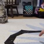 猫転送装置を信じない猫、装置の破壊を試みる