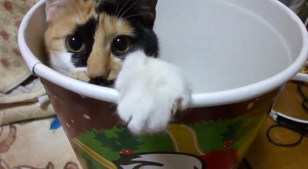 141116nekobarrel 600x330 - クリスマスバーレルに寛ぐ三毛猫、すっかり冬の風物詩に