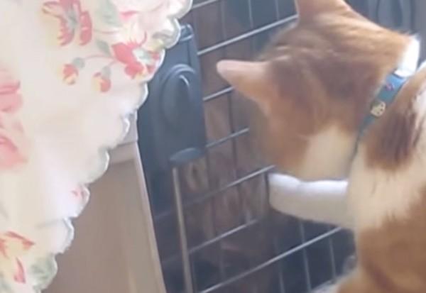 141122catanddog 600x413 - 体調を崩した犬を心配する猫、キャリーの扉の鍵を開けて見舞う