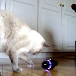 SONYのRollyが猫の声で鳴いたら、猫の反応はこうなる