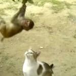 大人の余裕を見せる猫、子猿のターザンと戯れる