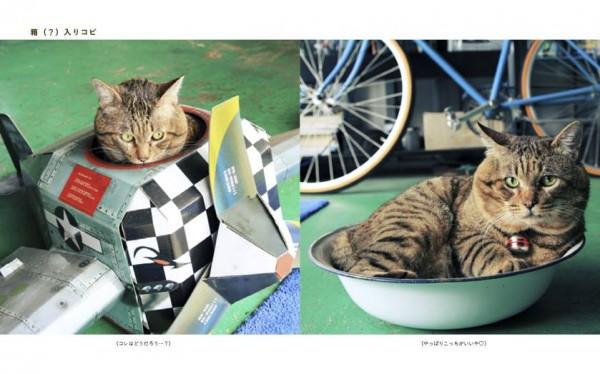 141202potyaneko01 600x374 - ふくよかな猫たち、写真集にてフォトジェニックな姿を披露