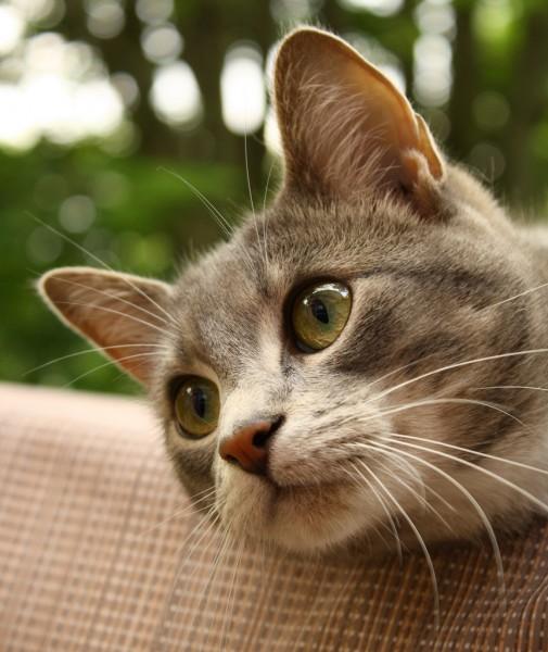 141205cat 505x600 - 本日の美人猫vol.114