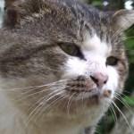 田代島の猫による政見放送、シュールすぎてほのぼの映像に