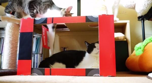 150108catswitch 600x330 - 落とし穴式ピタ猫スイッチ、落ちて押されて猫が跳び出る
