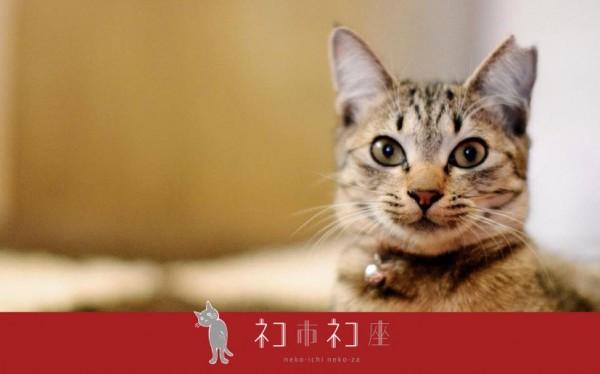 150120sakuraneko 600x374 - 殺処分ゼロに繋がる「さくら猫」の認知拡大の取り組み、クラウドファンディングで支援を募る
