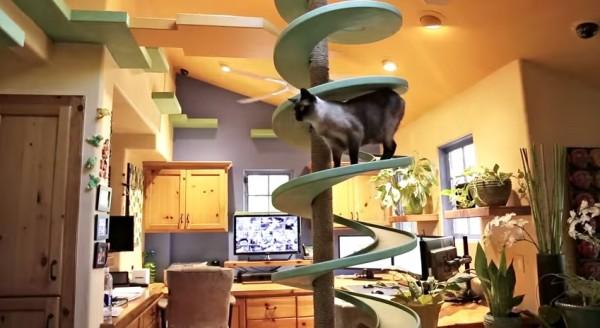 150123cattower 600x328 - 15匹の保護猫と鯉とルンバ、技巧を凝らしたスペシャル猫ハウスに暮らす