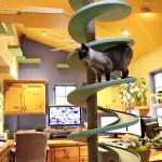 15匹の保護猫と鯉とルンバ、技巧を凝らしたスペシャル猫ハウスに暮らす