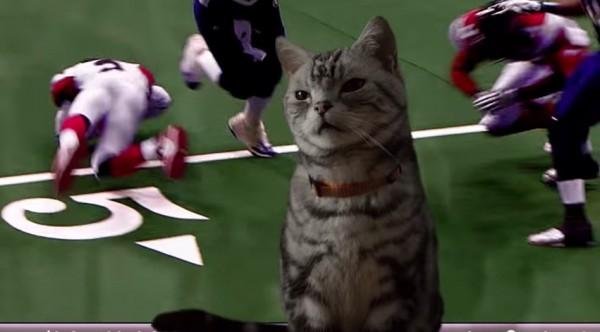 150124Superbowl 600x332 - スーパーボウルに夢中な人を前にした猫、見事な手法でご飯へタッチダウンを決める