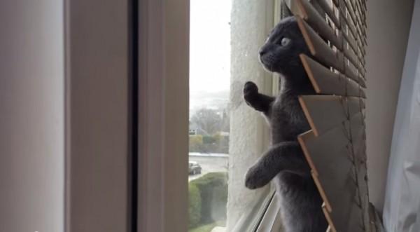 150205catSnow 600x331 - 目を見開き立ち上がる子猫、初めて見る雪に大興奮
