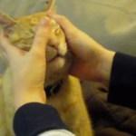 顔マッサージを受ける猫、施術後に絶妙なギャップ顔を見せる