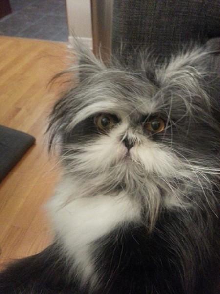 150209atchoum10 450x600 - 犬と見まごう多毛症の猫、その行動はやっぱり猫そのもの