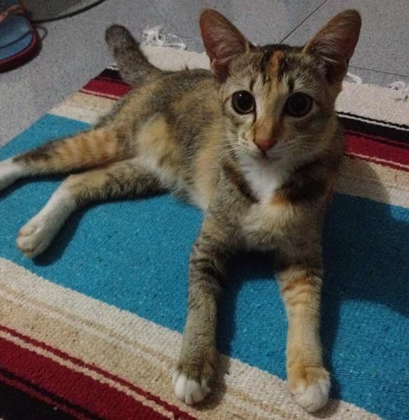 150215cat 585x600 - 本日の美人猫vol.122