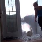 ご飯コールに飛んできた猫、雪壁に大穴を空ける
