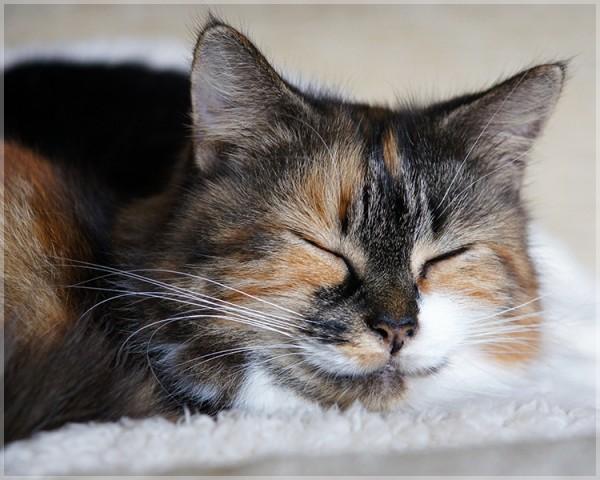 150220Smilecat 600x480 - 本日の美人猫vol.123