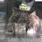 温泉気分のウォーキング猫、約1年で2kgの減量に成功