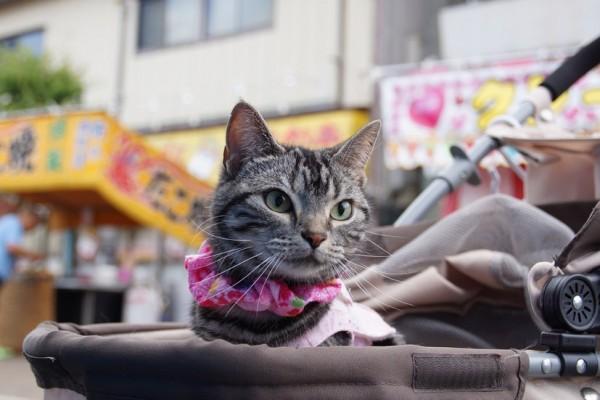 150222catFestival 600x400 - 2015年も2/22は猫の日祭り!ネット各所の猫祭りまとめ (追記あり)