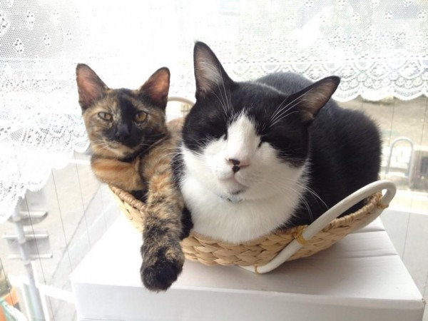 B0mNgFQCYAANnkG 600x450 - 2015年も2/22は猫の日祭り!ネット各所の猫祭りまとめ (追記あり)
