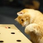 飼い猫も保護猫も幸せにする、猫もぐらたたきプロジェクトが始動