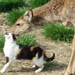 幼なじみの猫と鹿、仲が良すぎてまるで恋人