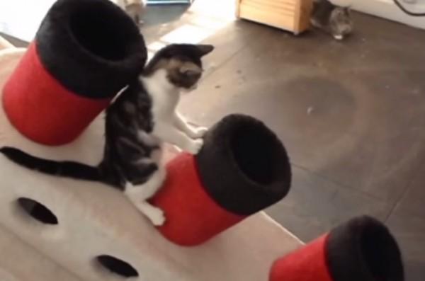 150329Titaniccat 600x397 - 船首をもたげたタイタニック、猫たち遊ぶ隠れ家になる