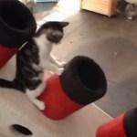 船首をもたげたタイタニック、猫たち遊ぶ隠れ家になる