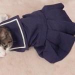 セーラー服を纏う猫、四月バカでもかわいさ満点