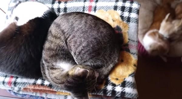 150411catadndog 600x329 - 仲良く寄り添い眠る猫、犬仲良しと対照的に