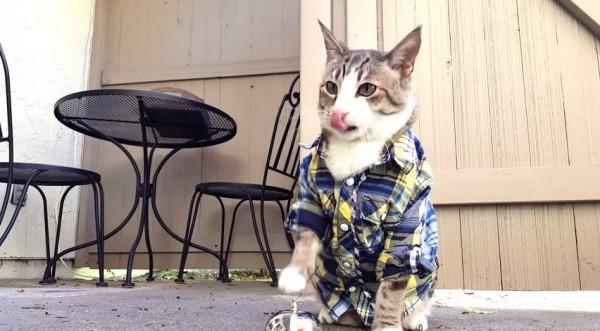 150429catrings 600x331 - 予想に違わずワンモアシング、ベルを鳴らしておやつを得る猫