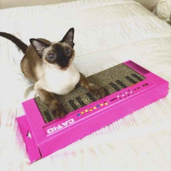 150502catkeyboard 600x600 - 「CAT-IO」のロゴ入りキーボード、爪を研ぎ研ぎ演奏気分に
