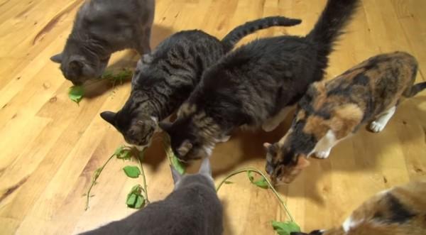 150516cats 600x331 - 無言で集まる6匹の猫、ほぼ無言のままパーティタイムに