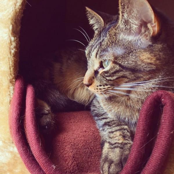 150521cat02 600x600 - 本日の美人猫vol.135