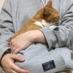 猫親気分を堪能できる「にゃんガルーパーカー」