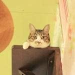 保護猫カフェ「ネコリパブリック」が東京進出。猫が助かるリワードで支援を募集