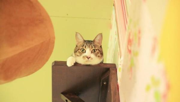 150528necorepublic01 600x339 - 保護猫カフェ「ネコリパブリック」が東京進出。猫が助かるリワードで支援を募集