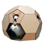 頭に戴く優勝カップ、サッカーボールの猫ハウス