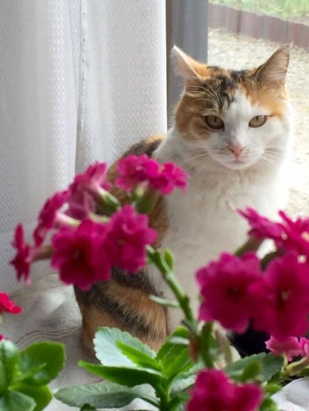 150604mike 452x600 - 本日の美人猫vol.138
