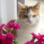 本日の美人猫vol.138