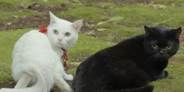 150607nekozamurai02 02 600x299 - 映画版『猫侍』の続編は、南の島へ。さりげなく黒猫も登場