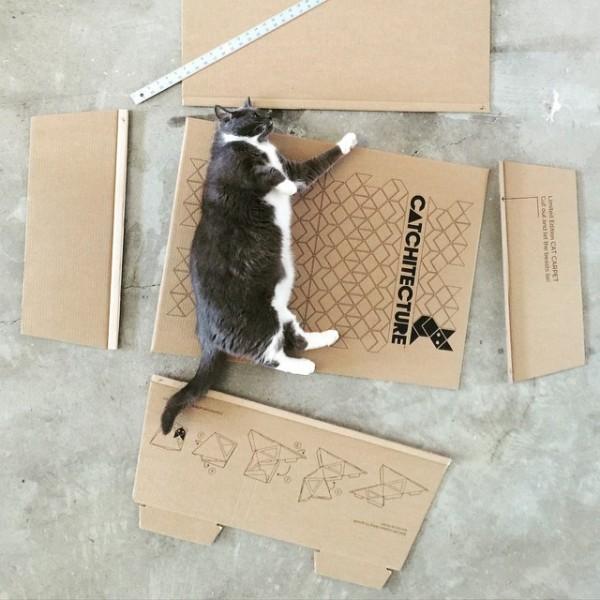 150610Catchitecture02 600x600 - 近未来風猫ハウス、なぜか落ち着く不思議な形
