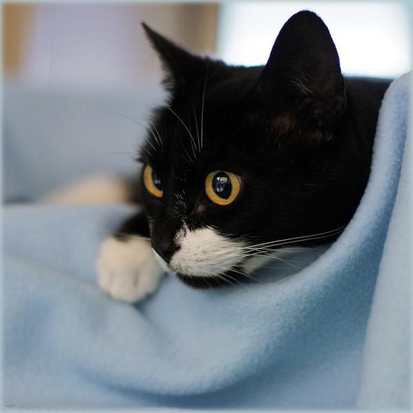 150613lovecat 600x600 - 本日の美人猫vol.139