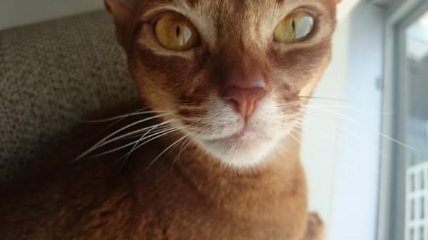 150614momo 600x337 - 本日の美人猫vol.140