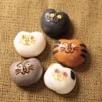 高山で三代続く老舗が「招福猫子まんじゅう」を発売。野良猫からのインスピレーションで