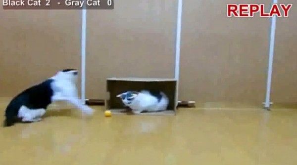 150706catsoccer 600x334 - ピンポン球の猫サッカー、意外と巧みなセーブを連発