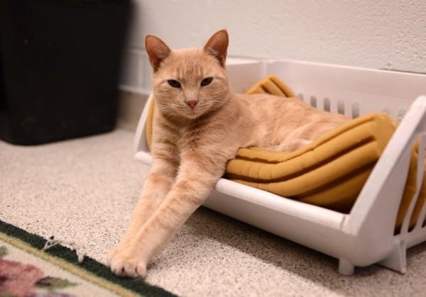 150712catHospital 600x419 - 猫飼い主は知っておきたい、東京都獣医師会「夜間診療のご案内」