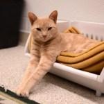 猫飼い主は知っておきたい、東京都獣医師会「夜間診療のご案内」