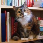 『世界で一番美しい猫の図鑑』の写真展が7/27〜開催。舶来猫ベッドの展示販売も
