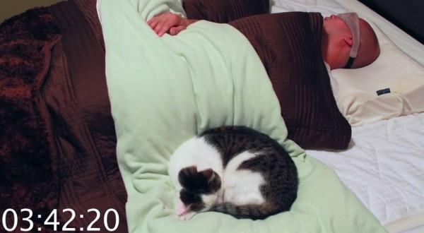 150716nidone 600x330 - 丸まりて人のベッドで眠る猫、二度寝をしたり踏み起こしたり