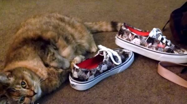 150721vanscat 600x333 - 靴に寄り添い猫まみれ、猫柄シューズにゴロゴロと